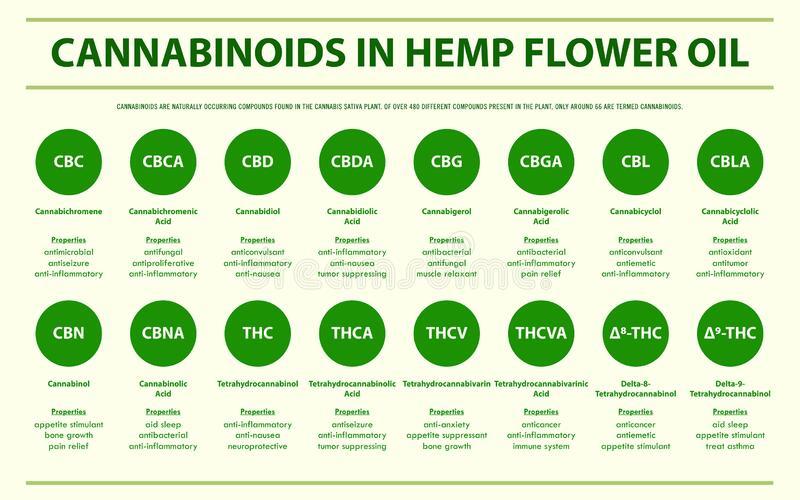 Liste infographique des cannabinoïdes présents dans l'huile de la fleur de chanvre